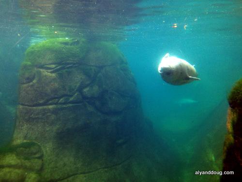 See Sea Lion?
