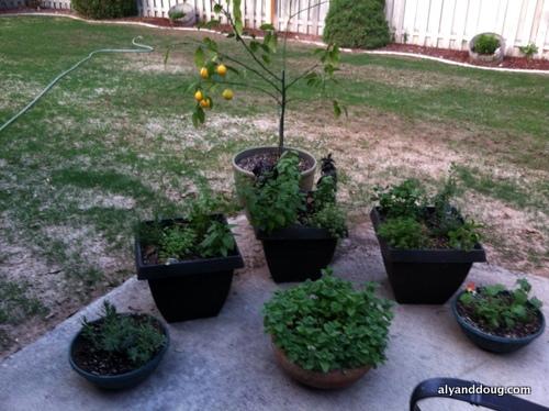 new grass + new herbs